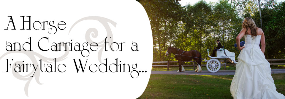 Wedding-Horse-Rental
